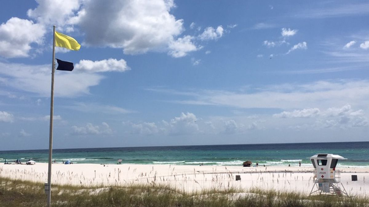 Purple flags are flying at some Panama City Beach beaches. It means there is stinging marine life in the water and if you get stung try to scrape the sting with something like a credit card and rise with saltwater. (WJHG/WECP)