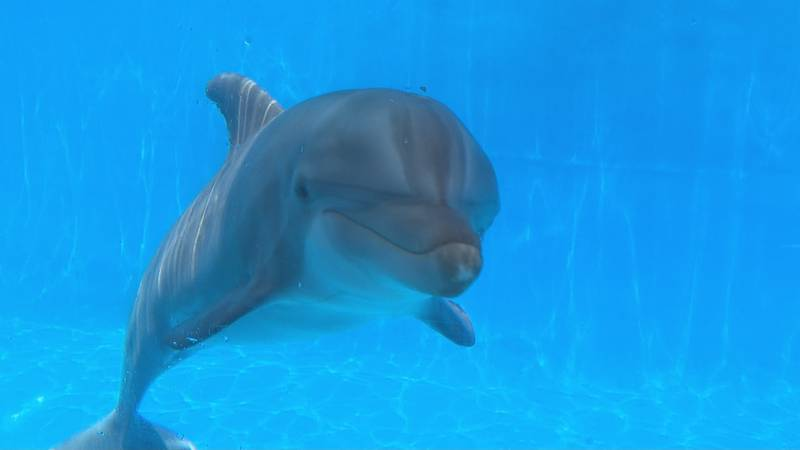 Videos have circled on social media showing boaters feeding some dolphins in the wild. But...