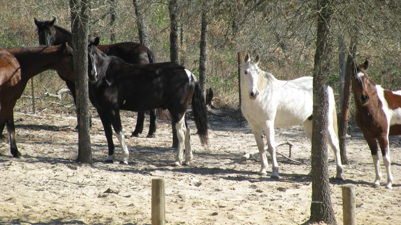 Sunshine Riding Trails in Chipley offers folks the chance to become a cowboy or cowgirl for a...