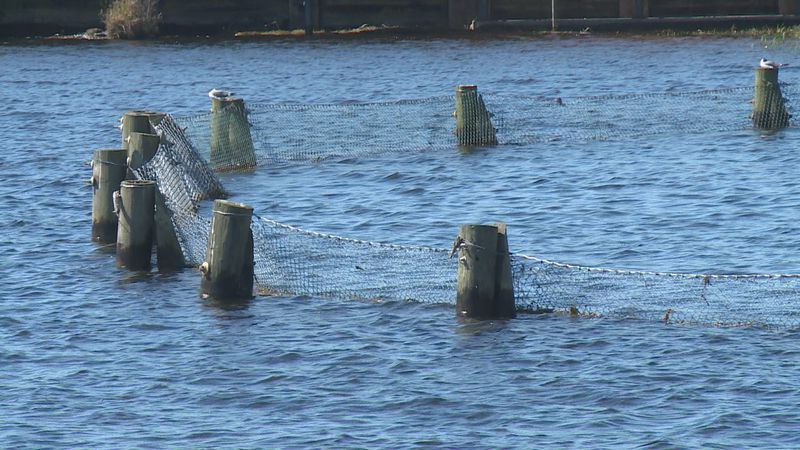 The FWC is hopeful about the effects of this drawdown.