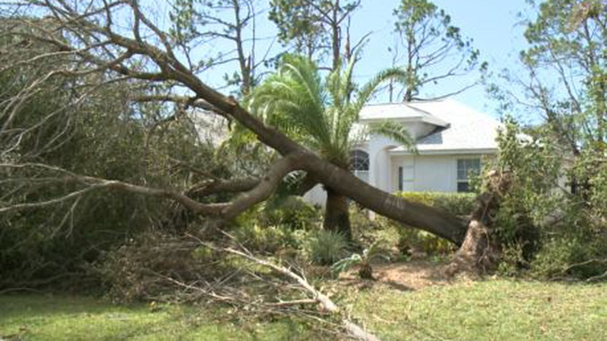 Officials say the private property debris removal program process in Bay County should begin in the beginning of January. (WJHG/WECP)