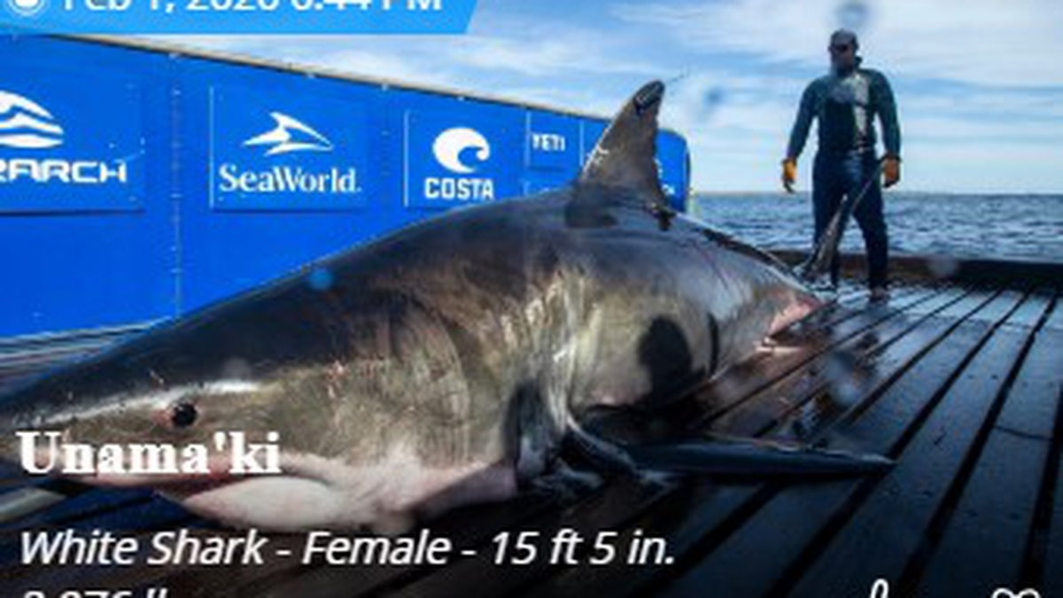 The great white pinged off the coast. (WJHG/WECP)