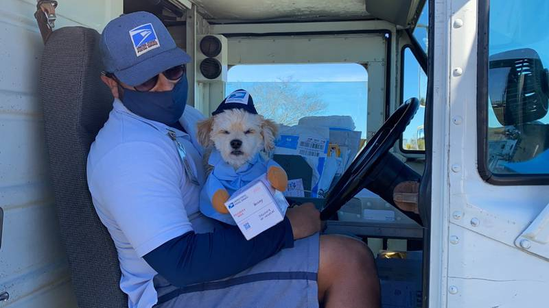 Buddy the Yorkie-poo dresses in a uniform just like his favorite mail carrier.
