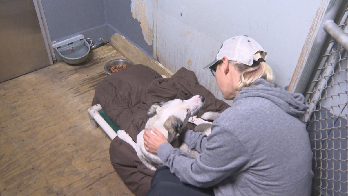 One animal refuge in Walton County shares how they keep their animals warm during cold spells....