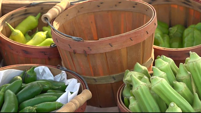 The Panama City Farmers Market hosted the first annual Harvest Festival on Saturday.