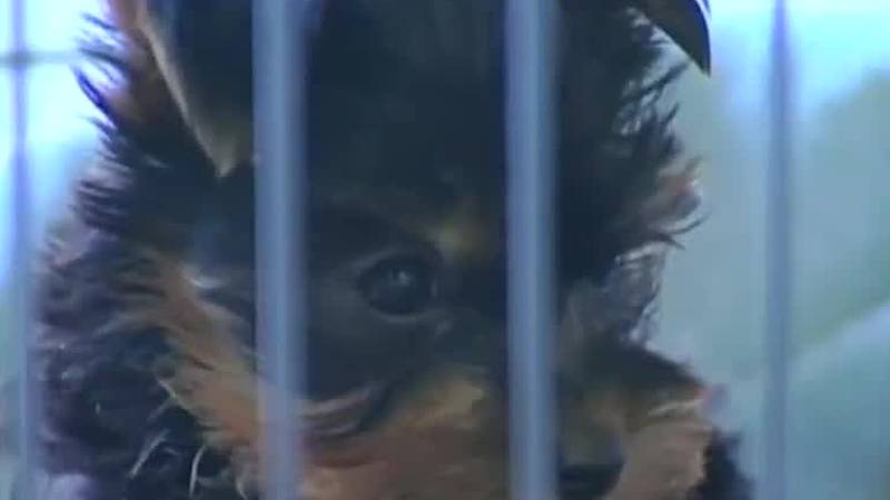 Proposed legislation recently filed at the state Capitol, if passed, would keep pet stores in...