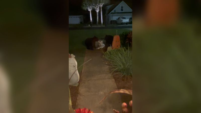 A Santa Rosa Beach family found a pair of bears on their porch Tuesday morning.
