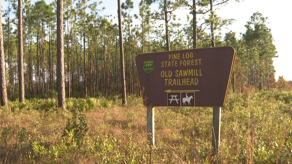 The remains were found by hikers more than a year after the man was reported missing. (WJHG/WECP)