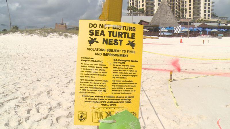 Sea turtle nesting season is approaching in Northwest Florida.