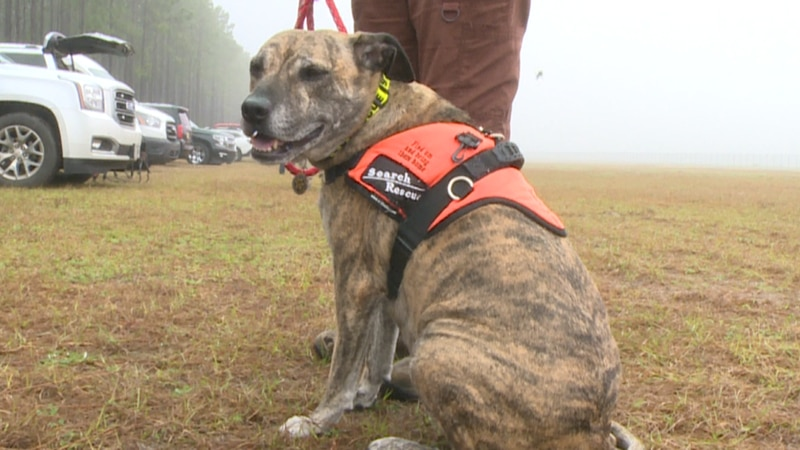Every year, Bay County's K-9 Search and Rescue Team hosts dozens of K-9s and their handlers...