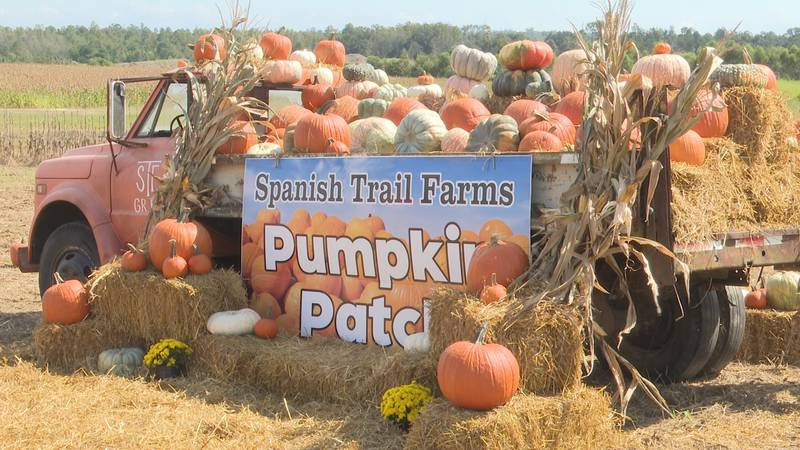 The Spanish Trail Farms Pumpkin Patch wil be open for the second year in a row throughout the...