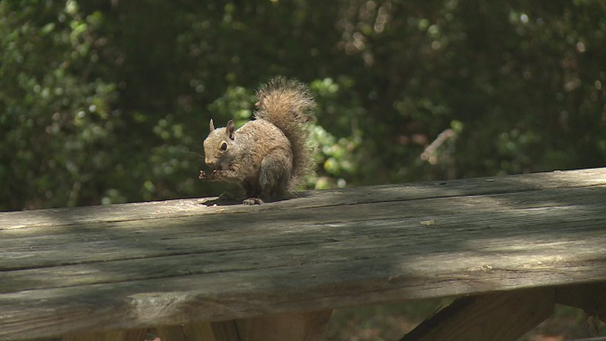 Camp Helen State Park reopens. (WJHG)
