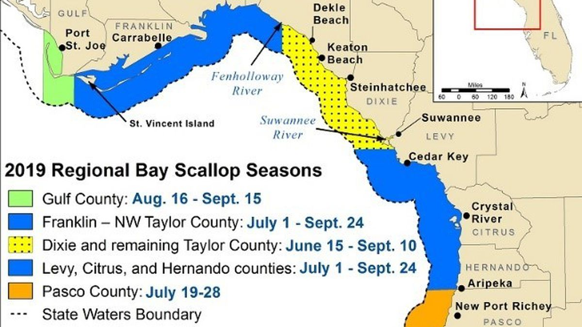 Scallop season opens August 16th for the St. Joseph Bay. (FWC)
