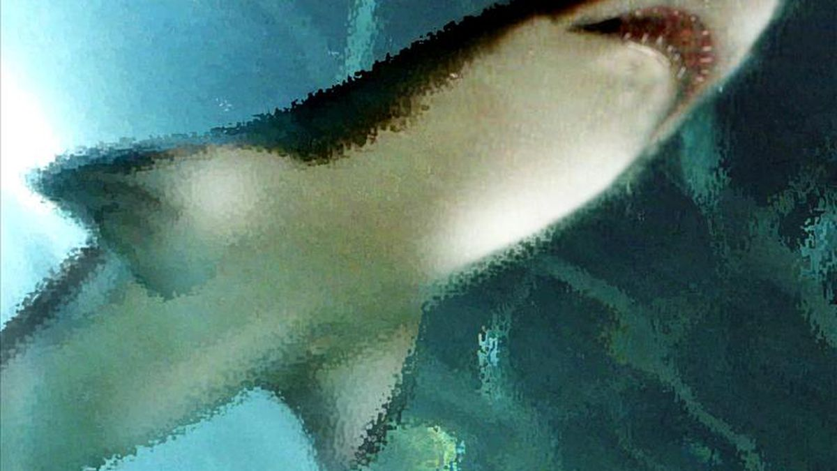An individual was bitten by a shark Thursday on St. George Island according to Franklin County...