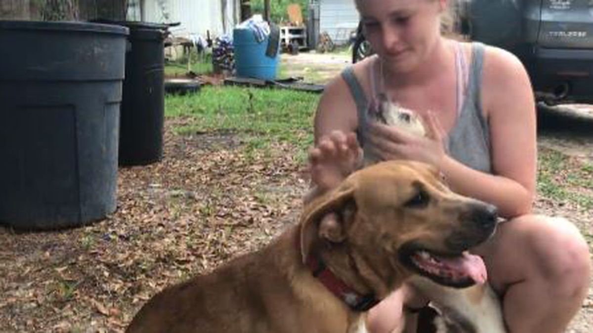The two family dogs stayed with a boy who went missing Wednesday. (WJHG/WECP)