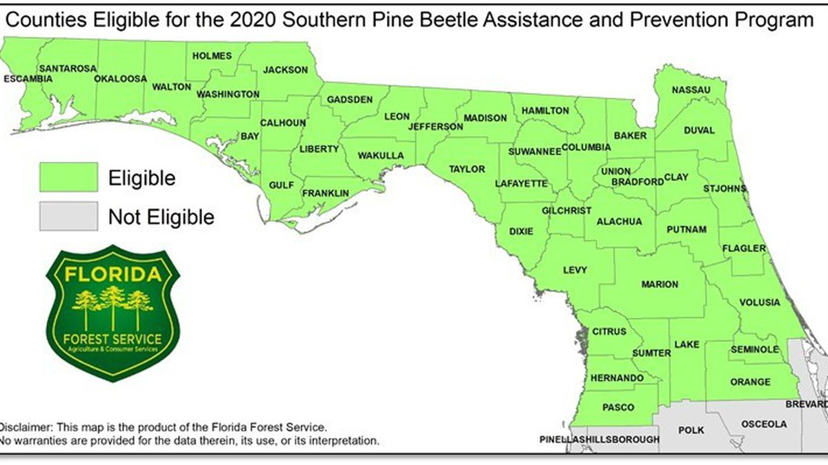 Landowners in Northwest Florida are able to apply for the 2020 Southern Pine Beetle Assistance and Prevention Program from the Florida Forest Service.
