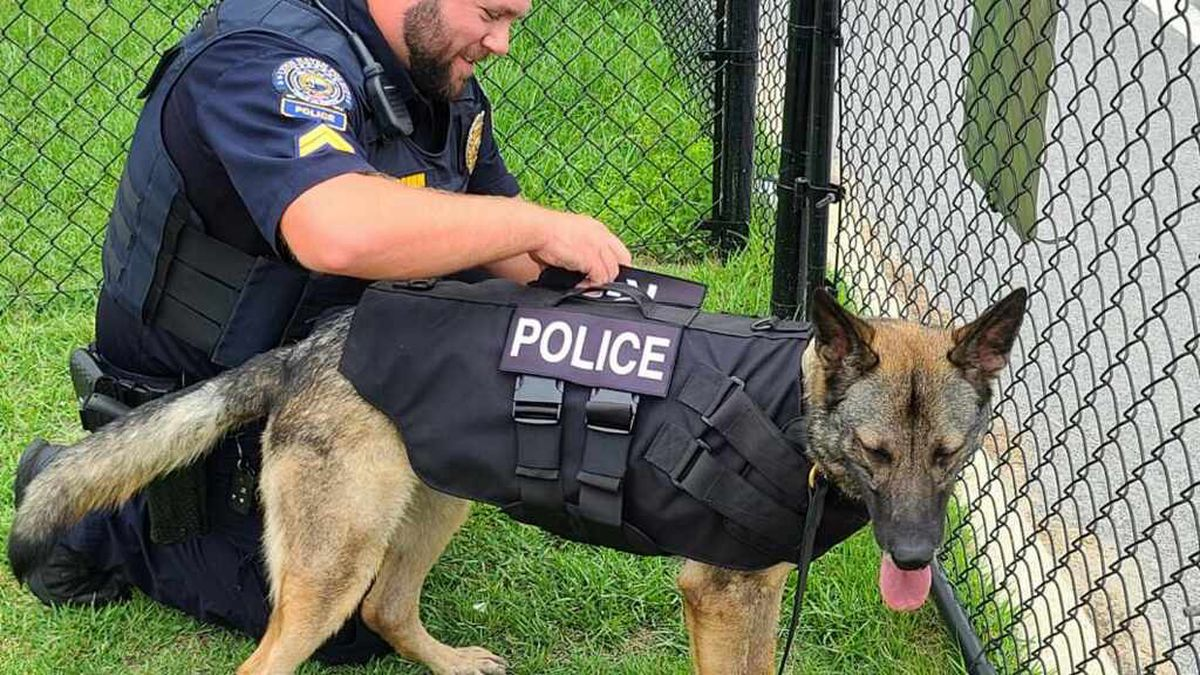 The vests will be worn when the K9 officers go into potentially dangerous situations. (LYNN...
