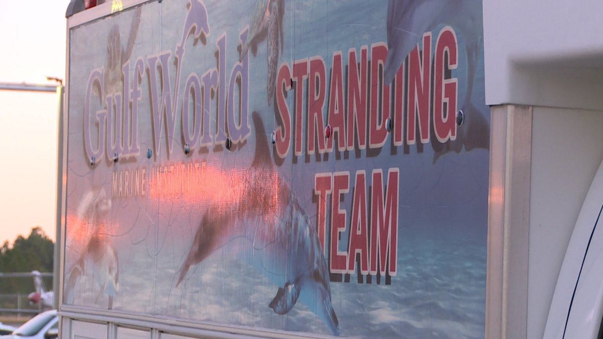 The turtles are said to be in good health. (WJHG/WECP)