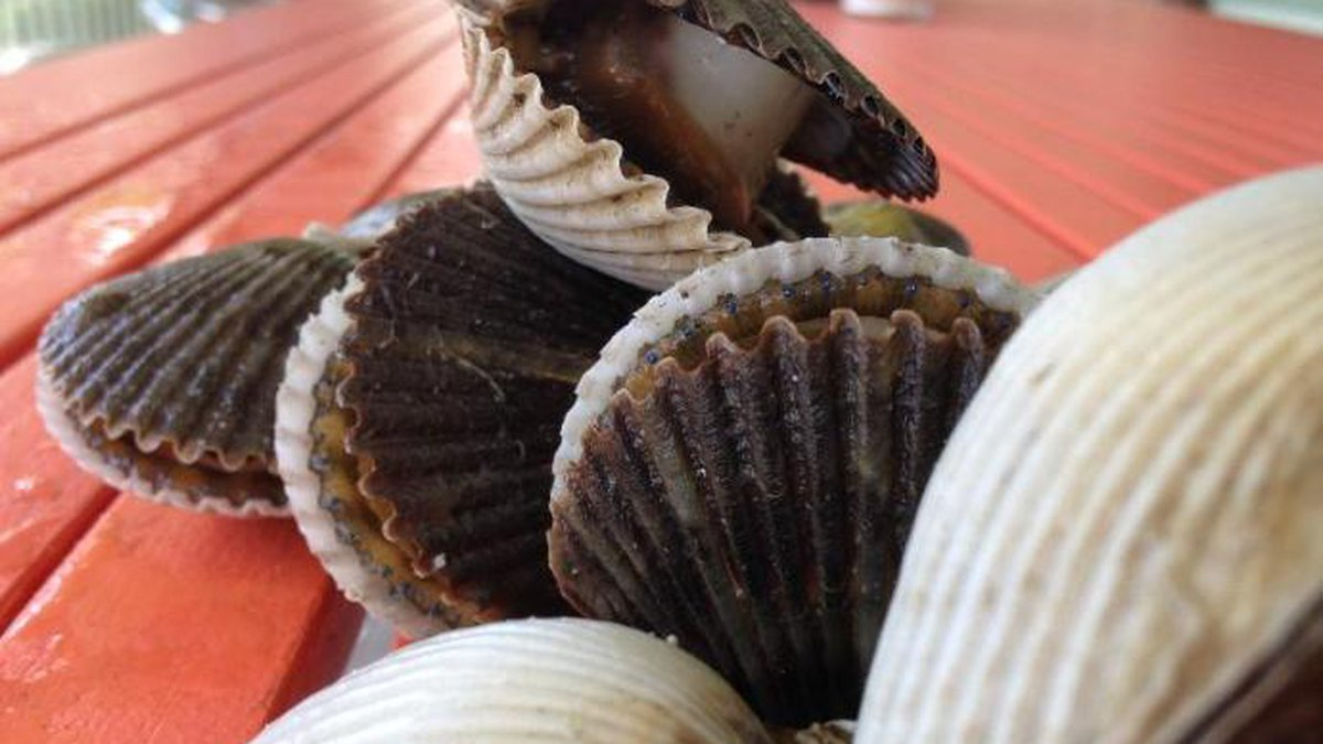 Scallop season for 2020 in Gulf County was announced Thursday. (WJHG/WECP)