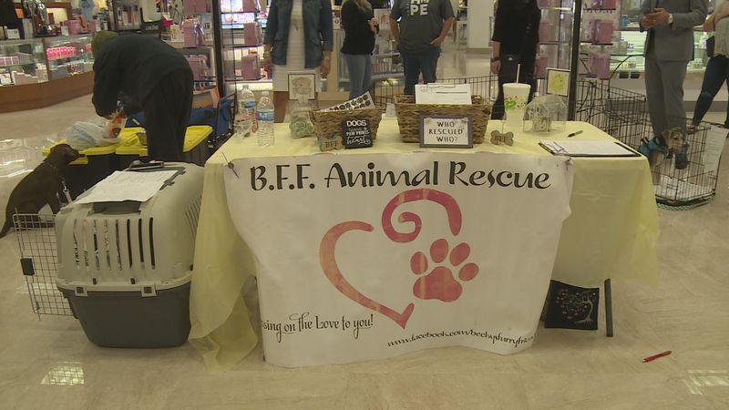 Dillard's and BFF Animal Rescue held a pet adoption event on Saturday