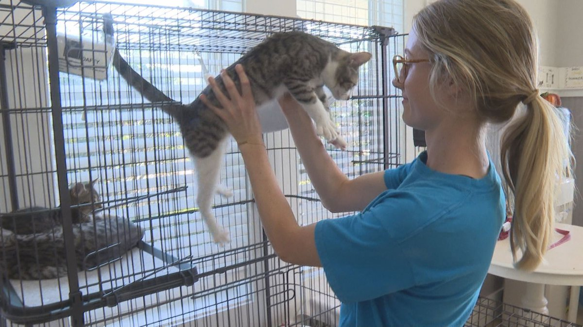 St. Joseph Bay Humane Society Staff drove nearly five hours to Georgia to bring more than 25...
