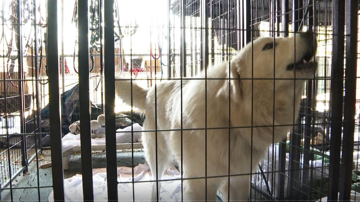 Alaqua Animal Refuge is expecting to help 38 dogs from a Louisiana shelter. (WJHG/WECP) -