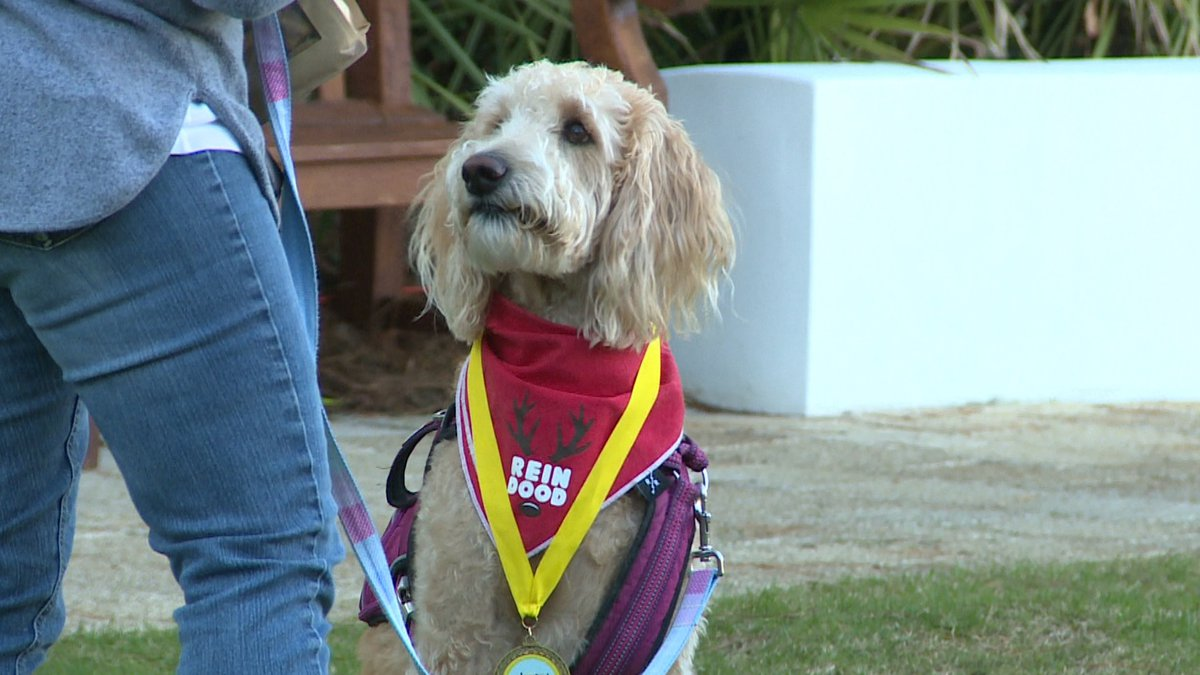 All proceeds from the event go towards Alaqua Animal Refuge. (WJHG/WECP)