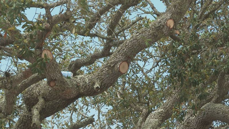 Neighbors in one South Walton neighborhood are upset trees were removed Monday.