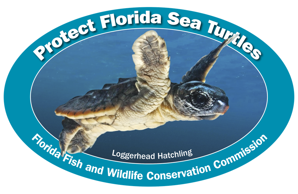 The Florida Fish and Wildlife Conservation Commission has released the 2020 sea turtle decal. All proceeds held conservation efforts.
