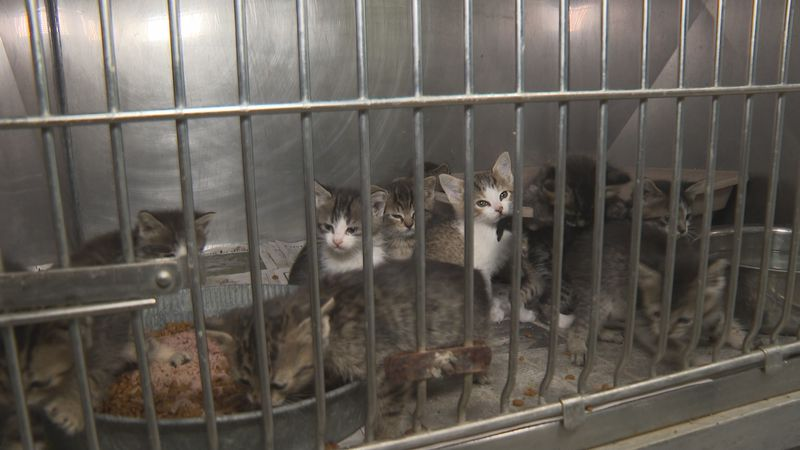 Friday alone, ten kittens were delivered to the Lynn Haven Animal Shelter.
