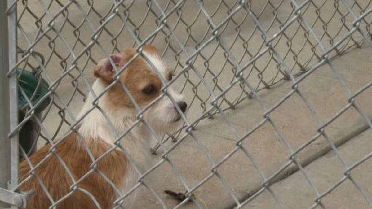 85 animals were rescued from an animal mill in Washington County, according to Alaqua Animal...