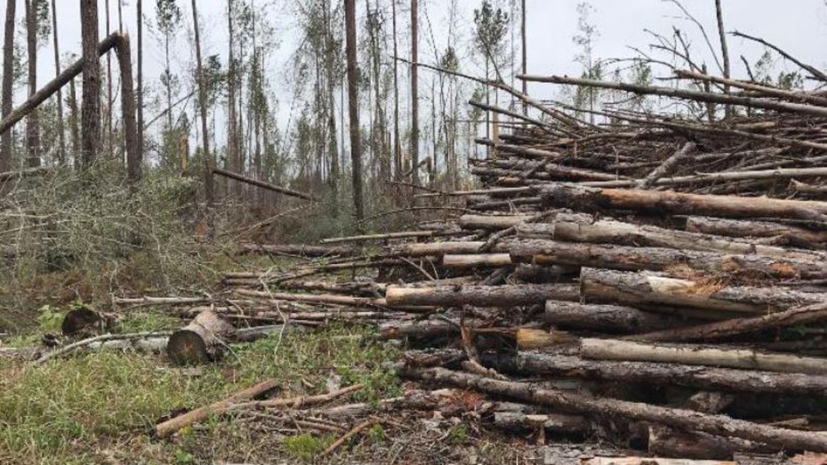 Agriculture Commission Nikki Fried said the timber industry lost $1.3 billion in crops after Hurricane Michael. (WJHG/WECP)