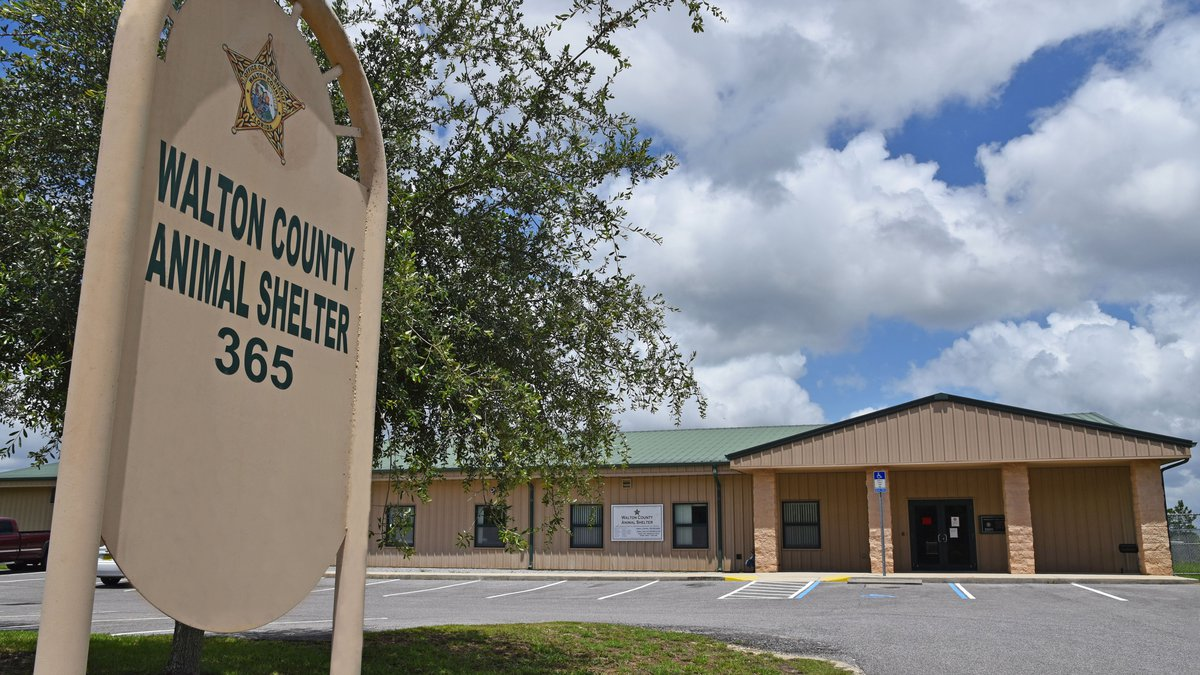 The Walton County Animal Shelter announced they will reopen their lobby starting Tuesday, June...